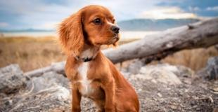 Pourquoi choisir une assurance animaux sans délai de carence ?