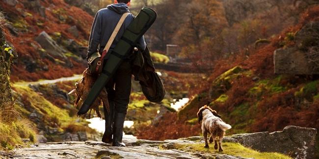 Pourquoi assurer son chien de chasse ?