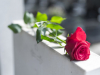Peut-on négocier le prix d'une assurance obsèques ? Si oui, comment ?